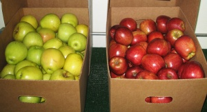 Extra Large Golden and Red Delicious Apples