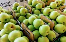 Early Gold apples